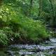Bild von einem Bach im Rheinhardswald