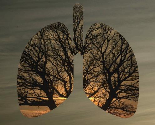 Lunge mit Baum